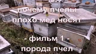 почему пчелы плохо мед носят - фильм 1 - порода пчел