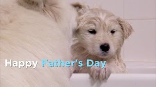 These Great Animal Dads Say Happy Father's Day From Animal Planet!