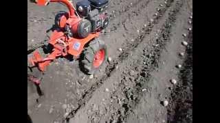 Посадка картофеля, мотоблок Салют  - апрель 2013(Посадка картофеля., 2013-05-01T18:14:38.000Z)
