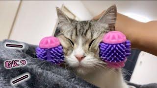 もち猫をフェイスマッサージしたらこうなりました…笑