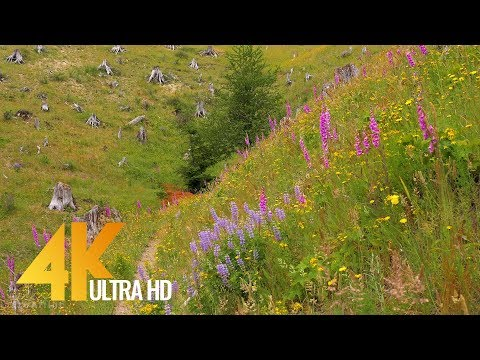 4K Multicolored Wildflowers - 3 HRS Nature Relax Video with Splendid Bird Songs