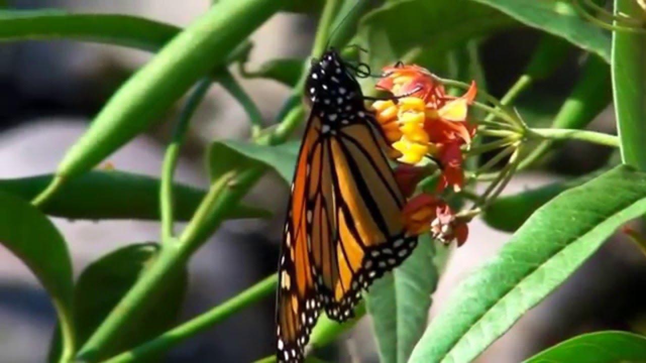 Manhattan beach botanic garden youtube - Manhattan beach botanical garden ...