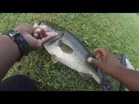 Whopper PLopper 90 Perch Chesapeake VA 7 2 16