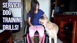 Training My Service Dog with My New Wheelchair ♿