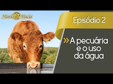 Quebrando Paradigmas (Ep. 2) A pecuária e o uso da água (beef cattle production and water use)