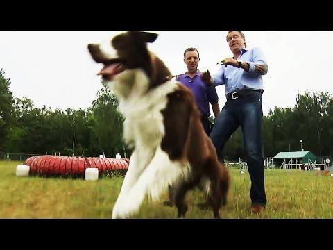 Hundeerziehung: Nie wieder gespannte Leinen!