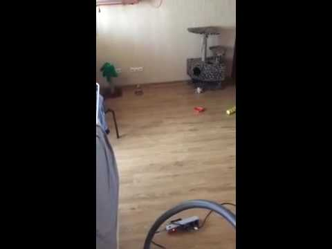 Кот забрался под натяжной потолок.