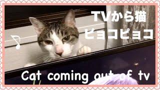 猫の手やシッポがピョコピョコするテレビ Funny Cute Cat Videos