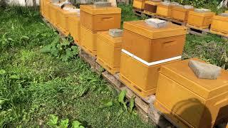 عالم النحل ,شرح مراحل تشتية النحل