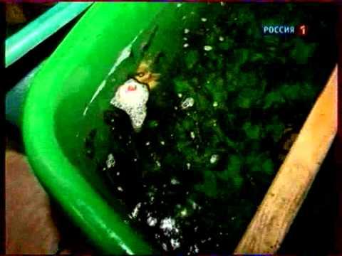 сом клариус африканский трофейная рыбалка