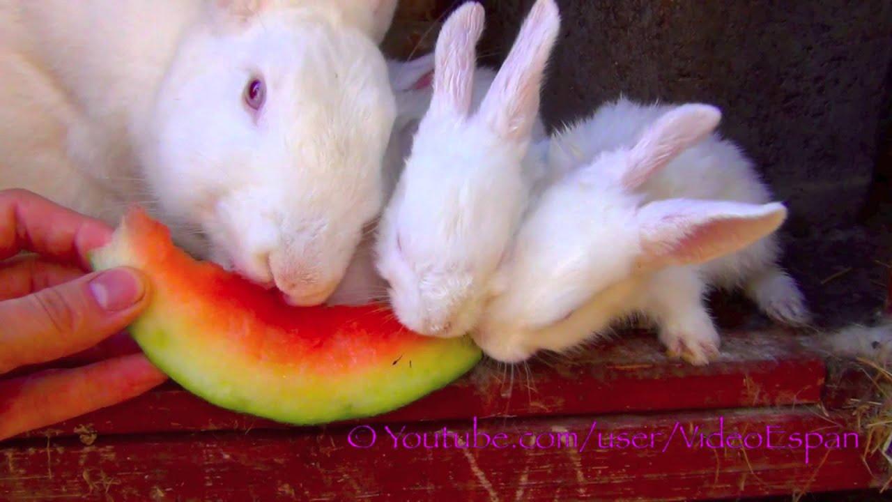 Conejos blancos cute comen cáscaras de sandía - Conejos bebes ...
