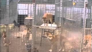 Зорина З.А. Мышление животных как эволюционная предпосылка мышления человека