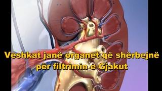 Anatomia Dhe Funksioni I Veshkave- Sistemi Urinar(Ekskretor)