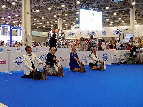 World Dog Show 2016 Moscow, Yorkshire terriers, Males