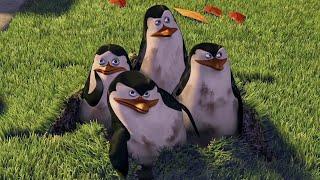 Пингвины Сцена с побегом из зоопарка Мадагаскар 2005