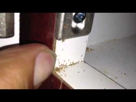 Mites in the pantry - YouTube