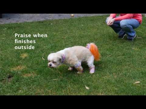 How to Potty Train (Housebreak)  Any Dog or Puppy