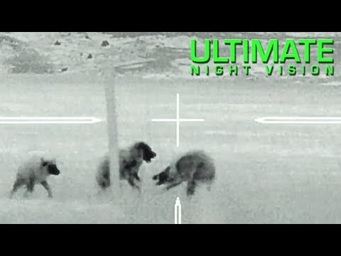 Best Thermal Coyote Hunting Footage with the Trijicon IR Hunter MKIII 60mm