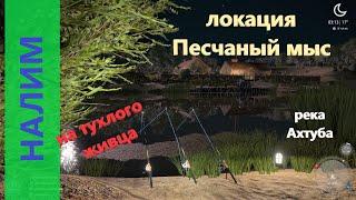Русская рыбалка 4 - река Ахтуба - Налим на протухшего живца