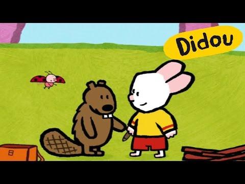 Castor - Didou, dessine-moi un castor |Dessins animés pour les enfants