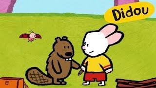 Castor - Didou, dessine-moi un castor  Dessins animés pour les enfants