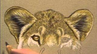 Preview  | Draw & Paint Wildlife with Pastel Pencils with Colin Bradley, Part 2