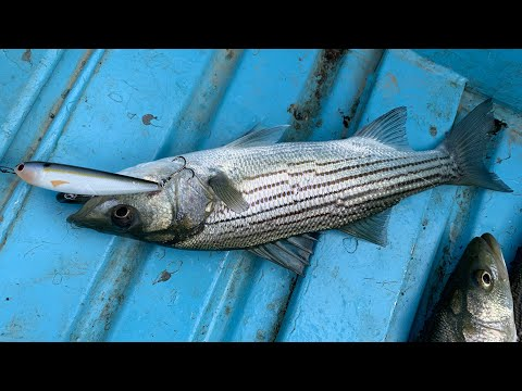 Pyramid Lake CA Striper Fishing (Chasing Boils) - July 29, 2019