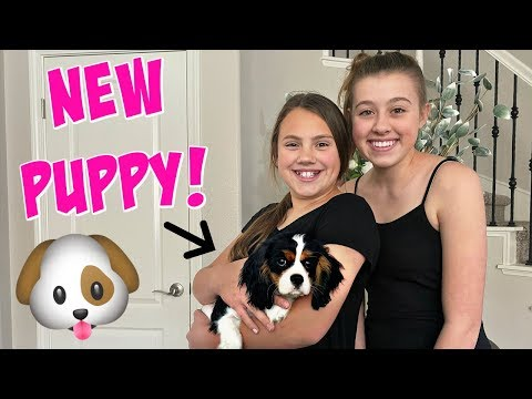 SURPRISING OUR KIDS WITH A NEW PUPPY! OUR NEW FAMILY PET