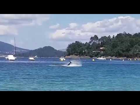 Un arroaz hace 'cabriolas' frente a Aguete