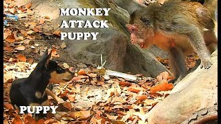 O M G!...T E R R I F I E D MONKEY ATTACK PUPPY | PUPPY TOO SMALL DEEP SCARE MONKEY