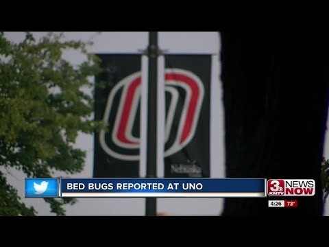 UNO looks into reported bed bugs on campus
