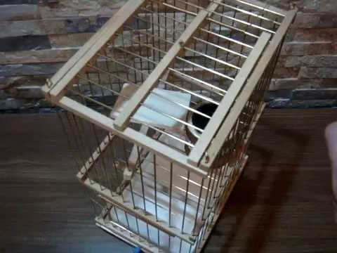 Multidetector Trap Cage for Sale/Cage piège Multirepris