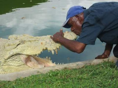 Man kisses huge hungry Crocodile