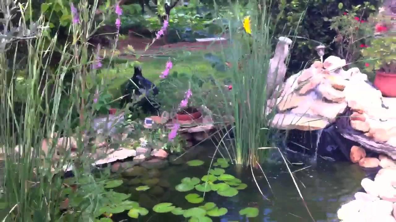 Estanque jardin con fuente nenufars y kois youtube for Fuente estanque jardin