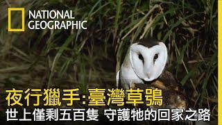 【夜行獵手臺灣草鴞】守護僅剩不到五百隻臺灣草鴞全片線上看