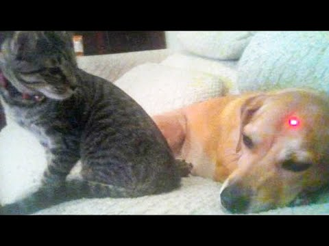 Dog and Cat Reaction to Laser Pointers – Funny Animal Reaction Videos