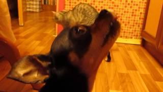КотоПес в Киеве: Кот и Пес: Как Вкусно Пахнет!