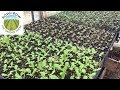 Complete Guide to Growing Vegetable Transplants
