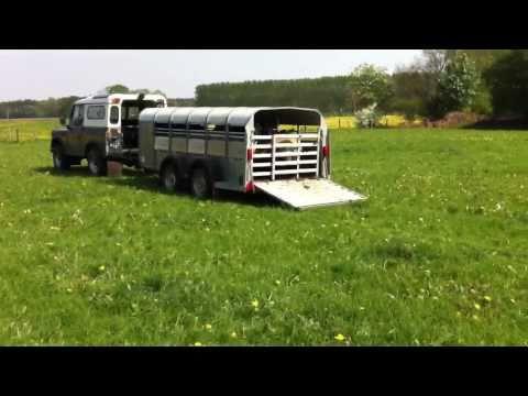 Specop Suffolk Ewes Outside 2011