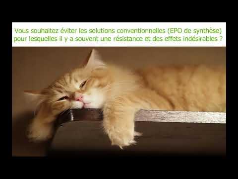 Nouveau Traitement Contre L'insuffisance Rénale Chronique Chez Les Chats