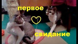 Кошка девон-рекс / Первое знакомство с котом