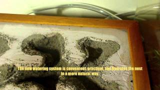 Habitat Nest 2.0 New Watering System & Camponotus noveboracensis New Satellite Nest