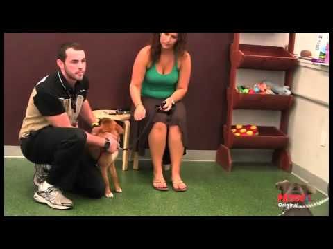 meet-a-petco-dog-trainer
