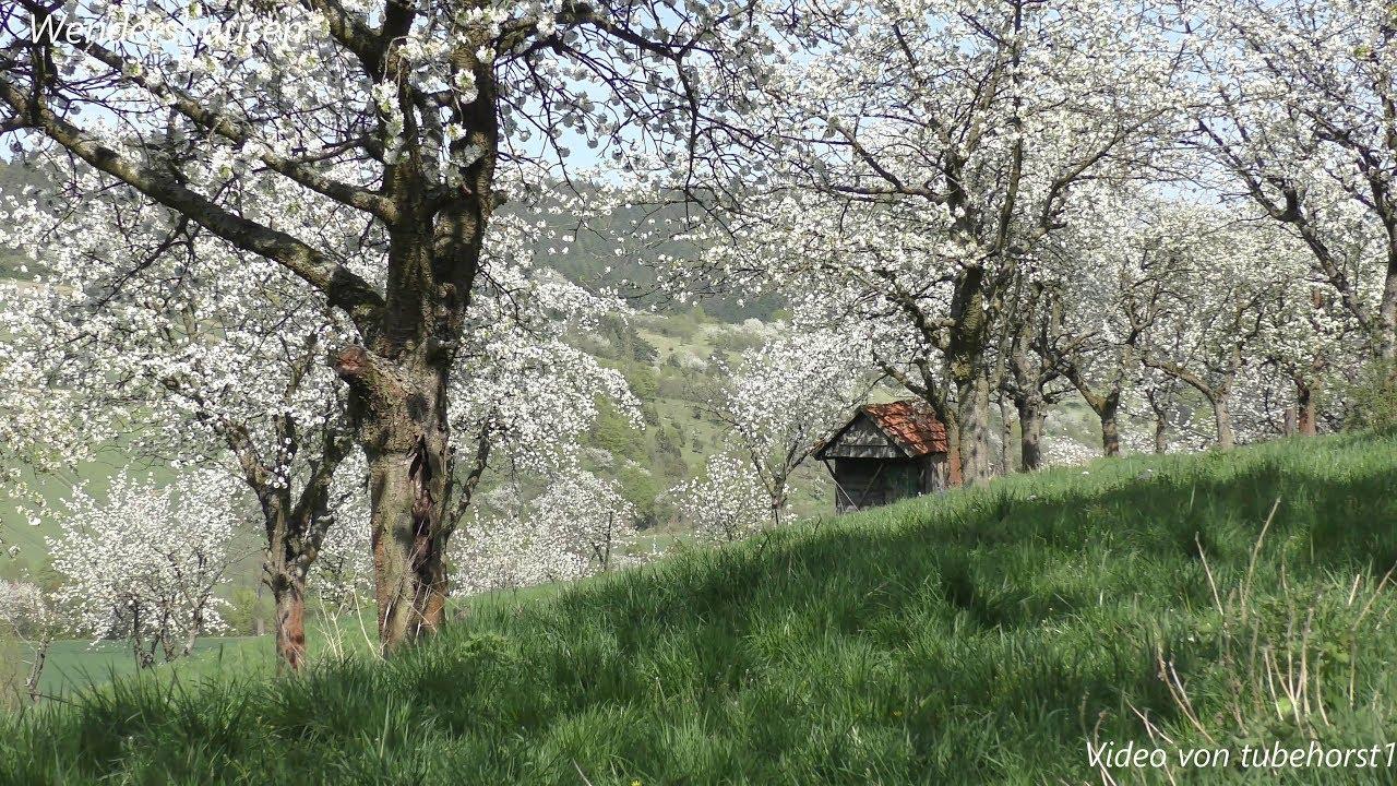 witzenhausen kirschblüte