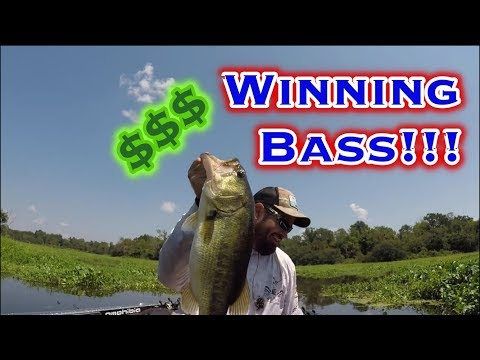 Lake Fork Bass Fishing: Tournament Challenge, Giant Bass!!!