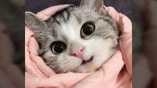 Милые картинки с котятами:З