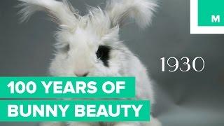 100年前から変わらぬかわいさ。ウサギのモフモフ経年変化?