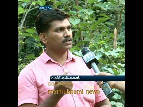 മിറാക്കിൾ ഫ്രൂട്ട് കർഷകൻ റഷീദ് | Miracle Fruit farming by Rasheed Malappuram