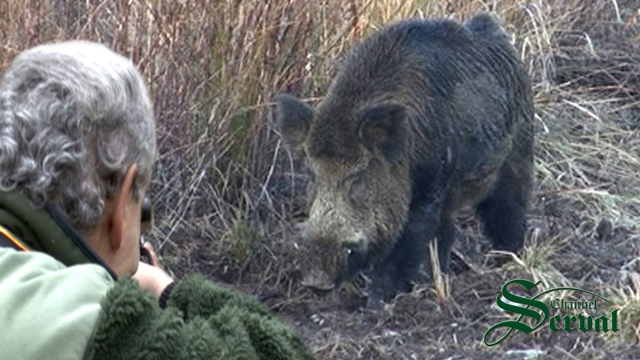 Giant wild boars - Best hunts in Croatia; Die beste Jagd ... Giant Wild Boar Photos