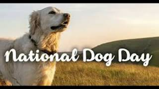 Every day is National Dog day / National Dog Day Special / National Dog Day! / Dog Day